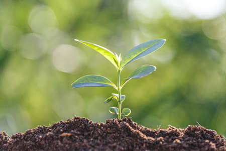 New life concept. Young plant in the morning light on defocused nature background