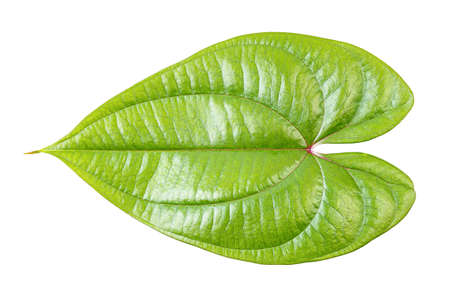Green leaf isolated isolated on white background