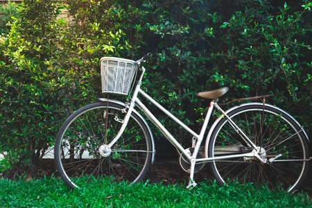 white vintage bicycle parks on green grass field against with green leafs wall background