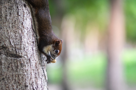 A squirrel eating nuts on the tree trunk.