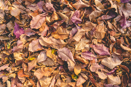 pile of fallen autumn dried leaves texture for background