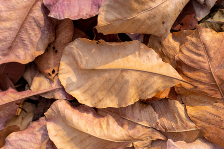 pile of fallen autumn dried leaves for background Imagens
