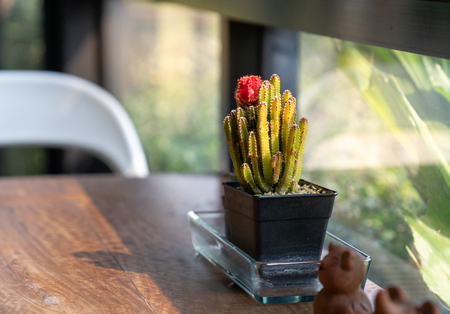 cactus with red flower in black pot on wooden table with morning light Imagens