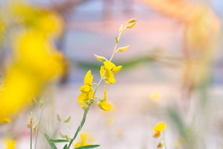 close up yellow grass meadow flower with copy space