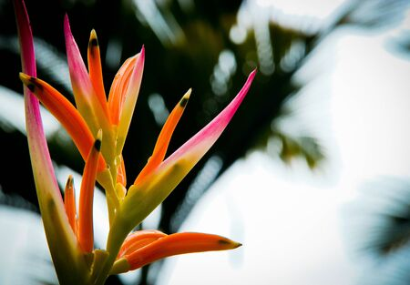 A red, pink, orange flower against the sky Stock Photo - 9833459