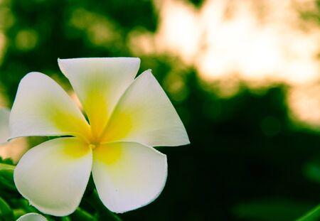 vegatation: A single fully bloomed white flower