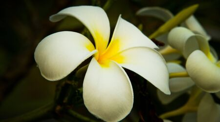 vegatation: Side view of white flower against a background of flowers