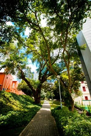 Park path photo