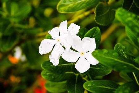vegatation: White flowers Stock Photo