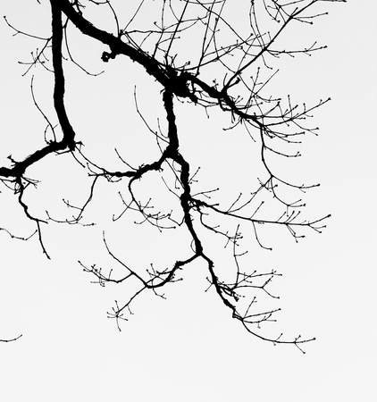 Barren branches  of a tree against the sky photo