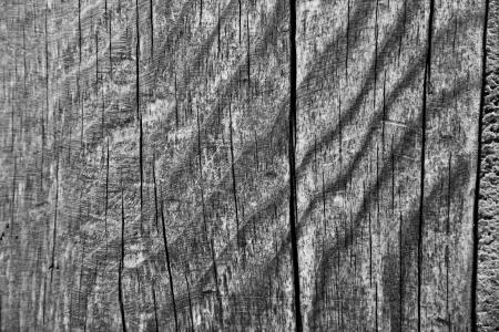 Textura de madera del grano en blanco y negro Foto de archivo - 20745457
