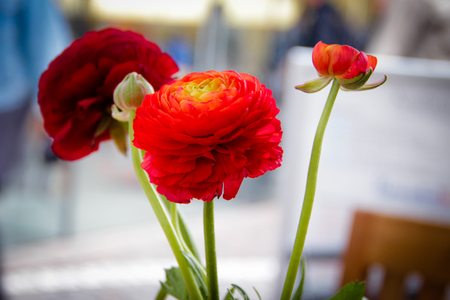 vegatation: 3 red bright flowers in a vase