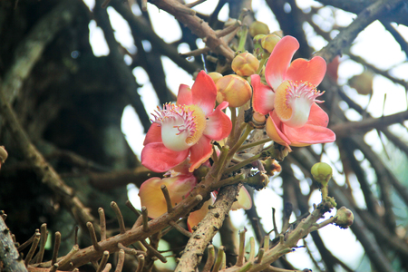 vegatation: Pink flowers growing on a tree against the branches