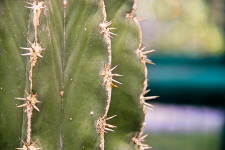 vegatation: Close up of the short thorns on a green cactus Stock Photo