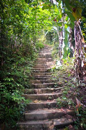 vegatation: Hidden Stairs leading upwards shrouded with leaves