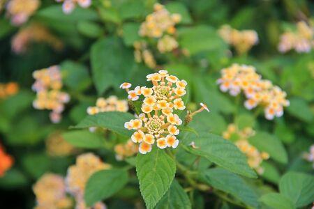 vegatation: Tiny white flower buds against green leaves