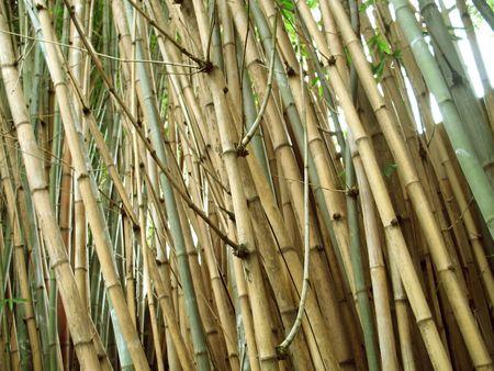 Chinese Bamboo Wall  Imagens
