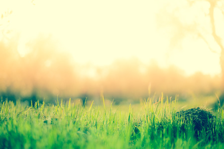 Green grass on pastel colors Background