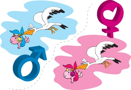 The stork brings  Baby is born, a boy or a girl  Illustration