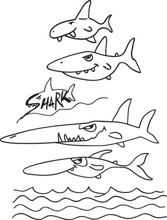 shark teeth: sharks