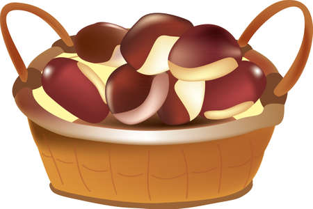 chestnut basket color vector draw