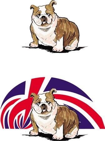 english bulldog: english bulldog