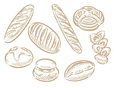 Many varieties of inviting bread. Isolated on white. Vector illustration.