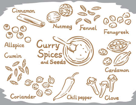 Spices for curry or Indian cuisine. Vector illustration.