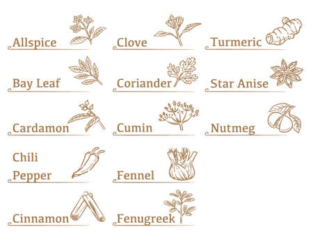 Labels and icons of spices. Vector illustration. Vektoros illusztráció