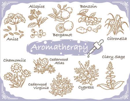 Set of aromatic herbs. Vector illustration. Illustration