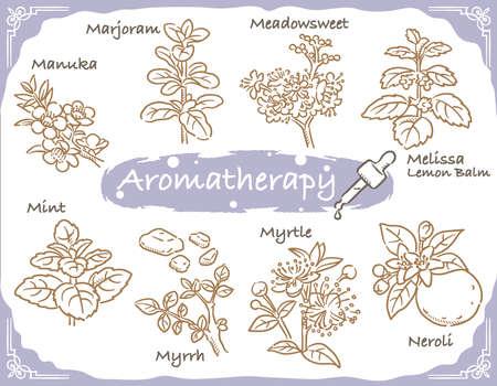 Set of aromatic herbs. Vector illustration. Ilustracja