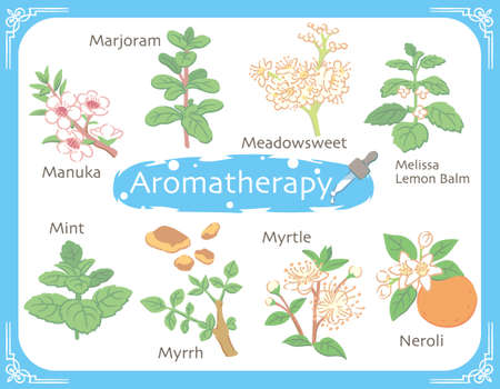 Set of aromatic herbs. Vector illustration. Vettoriali