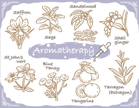 Set of aromatic herbs. Vector illustration. Иллюстрация