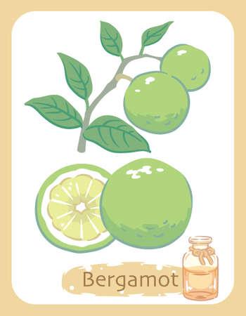 Illustration of bergamot and aromatherapy bottle. Vector illustration.