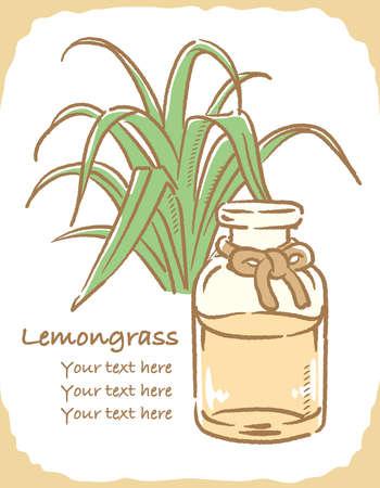 Illustration of lemongrass and aromatherapy bottle. Vector illustration.