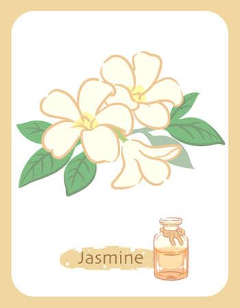 Illustration of jasmine and aromatherapy bottle. Vector illustration.