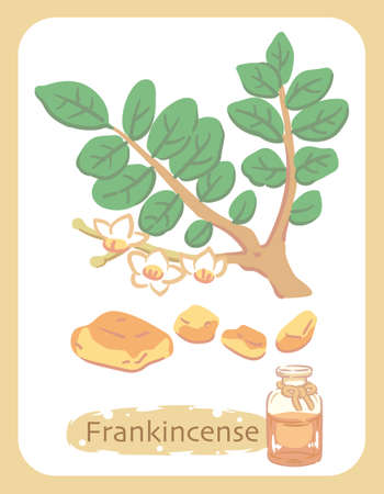 Illustration of frankincense and aromatherapy bottle. Vector illustration.