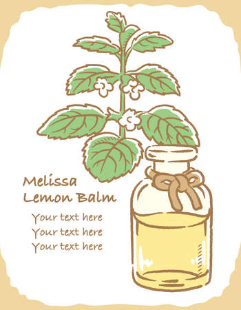 Illustration of lemon balm and aromatherapy bottle. Vector illustration. Ilustracja