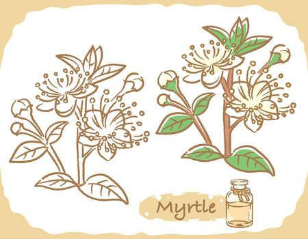Illustration of myrtle and aromatherapy bottle. Vector illustration.