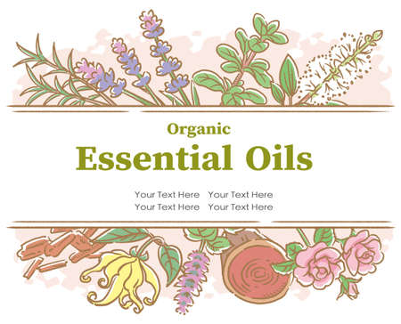 Design with popular essential oil flowers and herbs. Vector illustration.