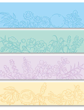 Set of banners or bancgrounds. Popular essential oil plants. Vector illustration.