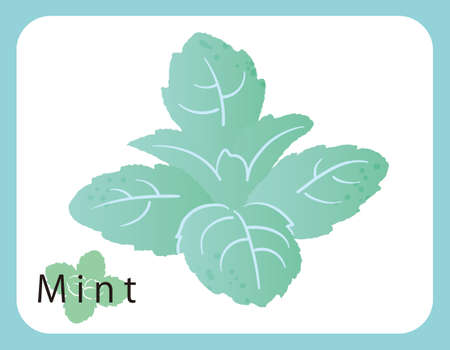 Mint icon, vector illustration.