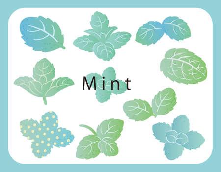 Mint, vector illustration. Icon set.