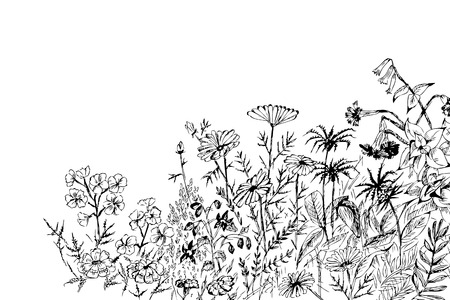 Summer flowers - vector hand drawing. Vector