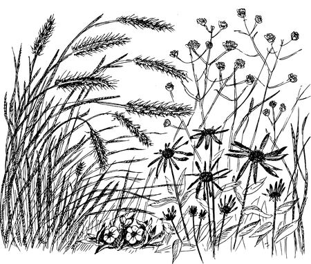 herb garden: Sketch - meadow with ears and flowers.