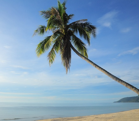 Coconut tree with blue sky day background