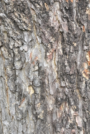 Texture shot of brown tree bark, closeup of cracked tree trunk
