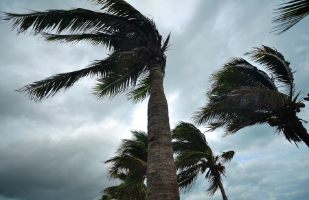 cell damage: palms at hurricane Stock Photo