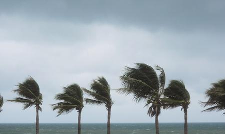 palme al uragano