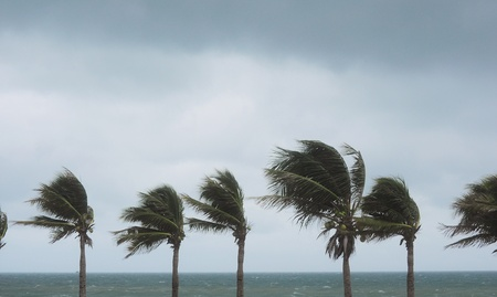 monsoon clouds: palms at hurricane Stock Photo